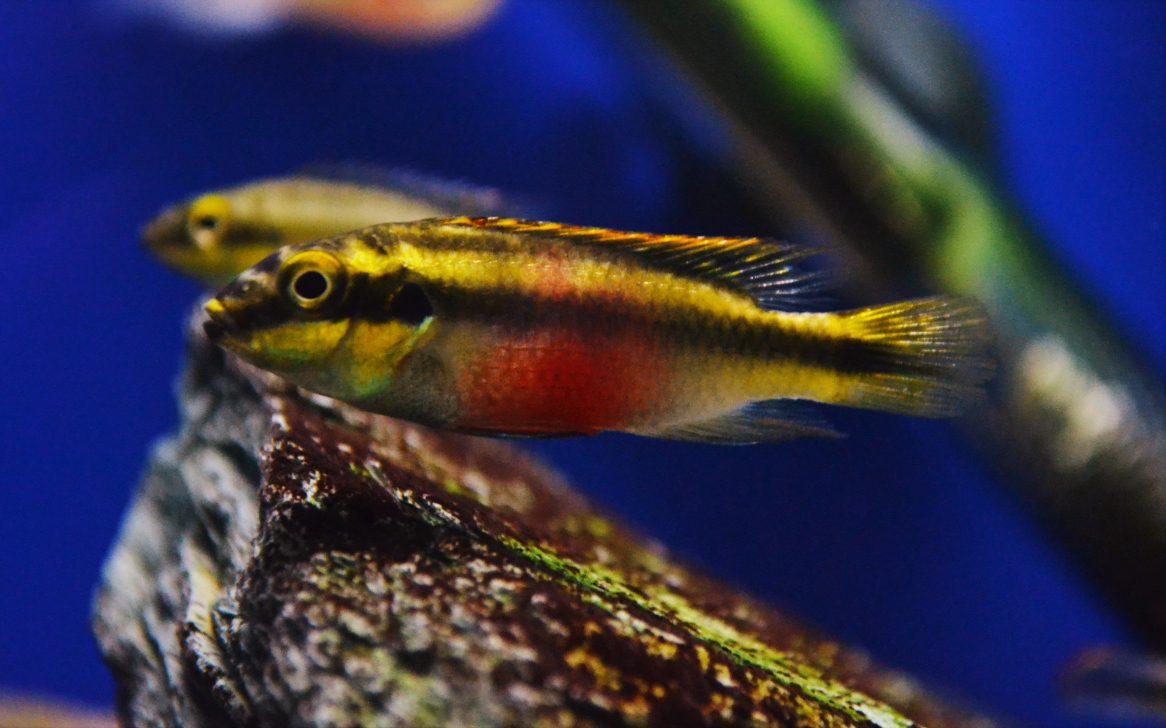 Freshwater aquarium fish uk - About Us